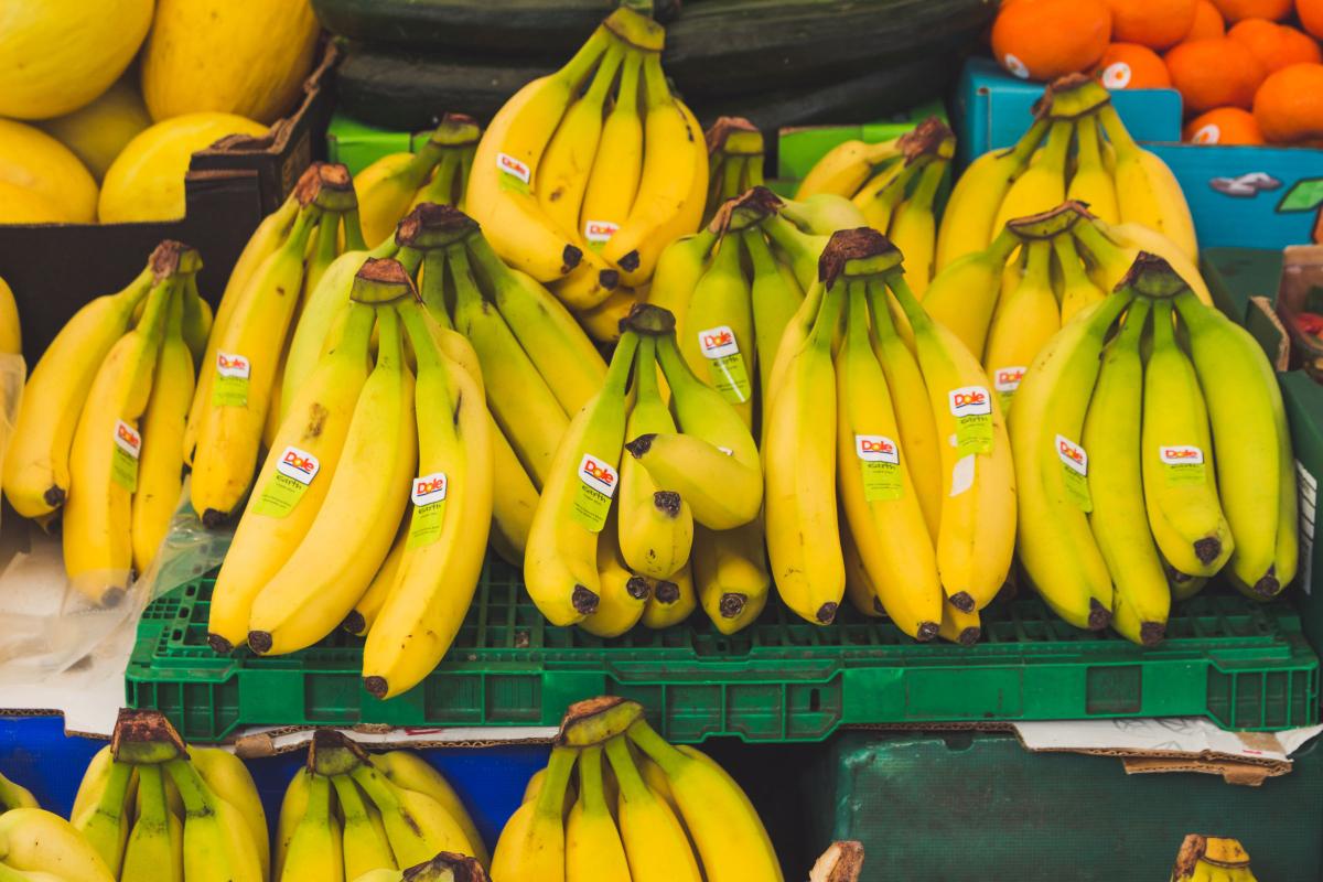 Giant Cavendish Bananas