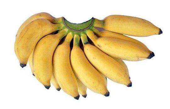 types of bananas