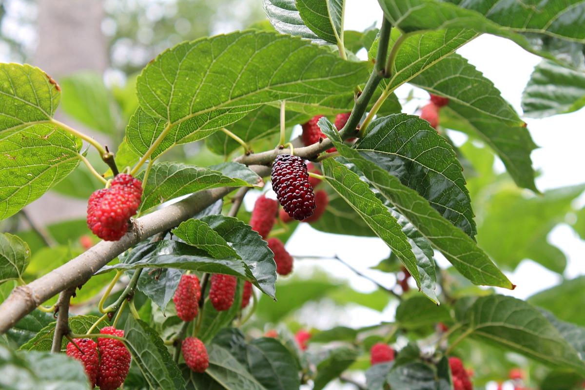 Types of Berries
